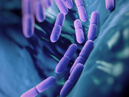 Probiotics  - PIS Research Article