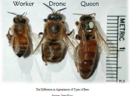 Honeybee or Queen: A Study of the Epigenetic Differentiation of Bees