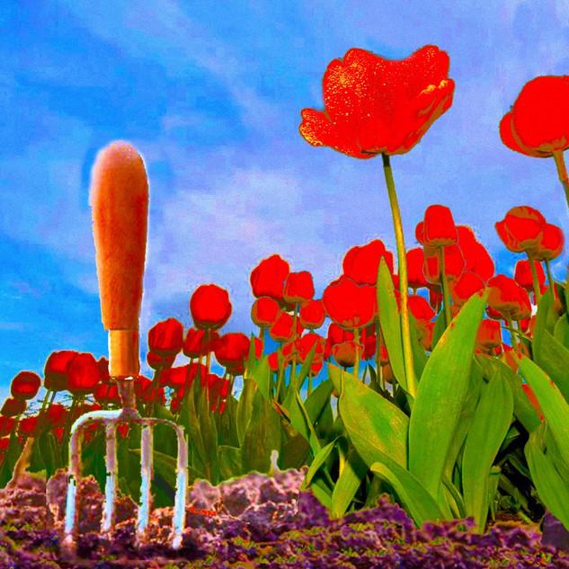 Tulips2_edited.jpg
