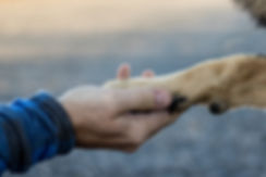 Richland Dog Pooper Scooper Service My Bomb Squad