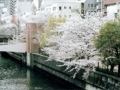 高麗橋の春夏秋冬