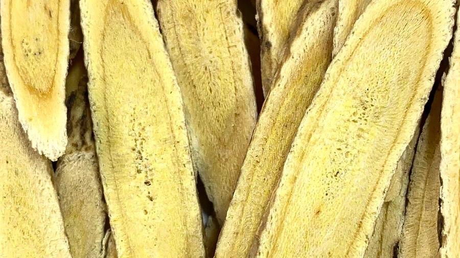 Astragalus 黄芪
