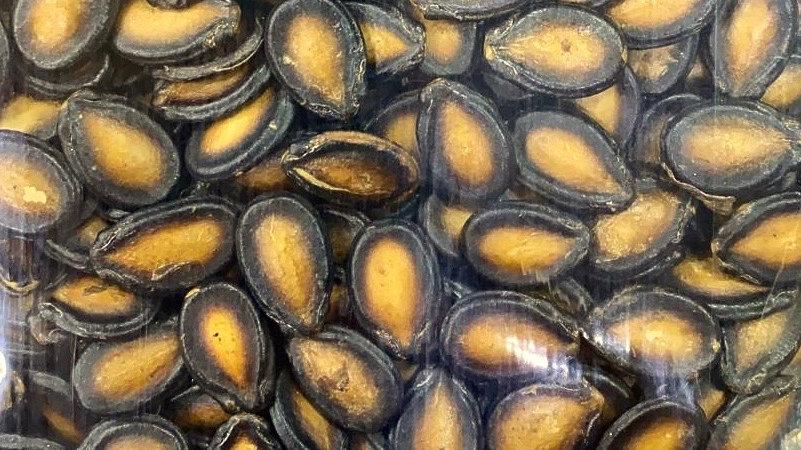 Black Guazi 黑瓜子