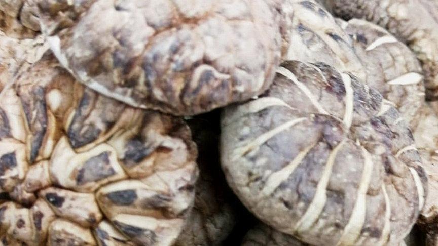 Cha Hua Mushrooms (size M) 茶花菇(中)