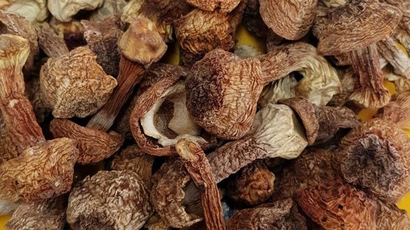 Almond Mushroom 姬松茸 (巴西菇)