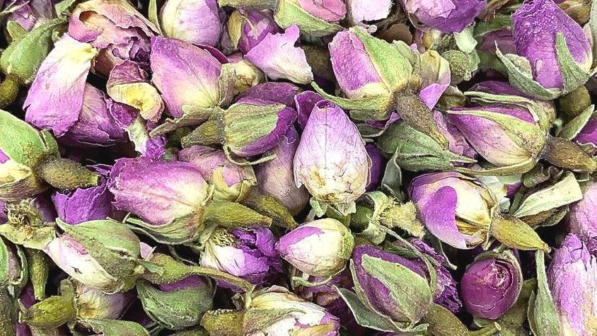 Rose (France) 法国玫瑰花