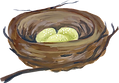 nest 2.png
