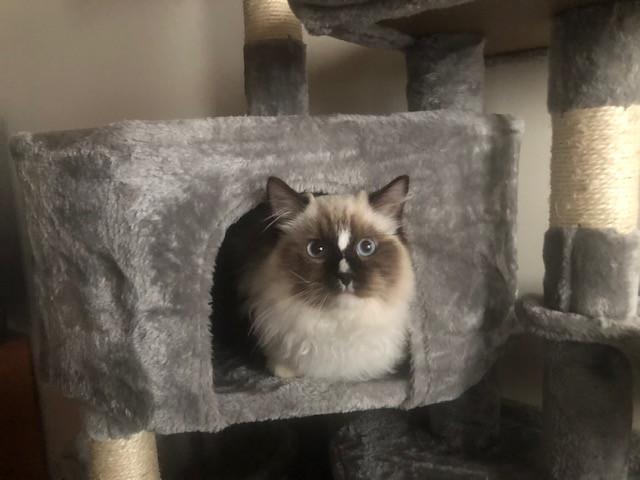 Raiku concentré sur la maisonette de l'arbre à chat...