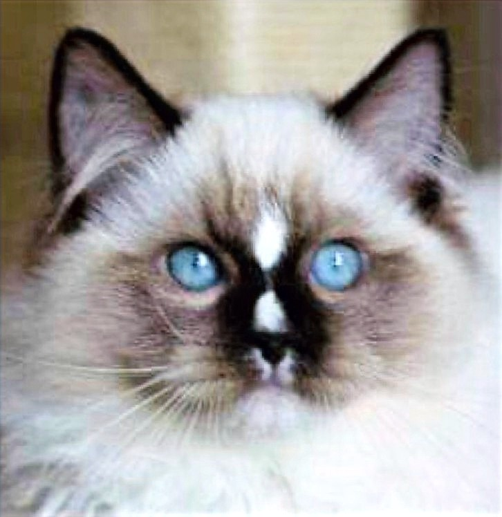 "Male Seal mitted ""Raiku"" en 2020"