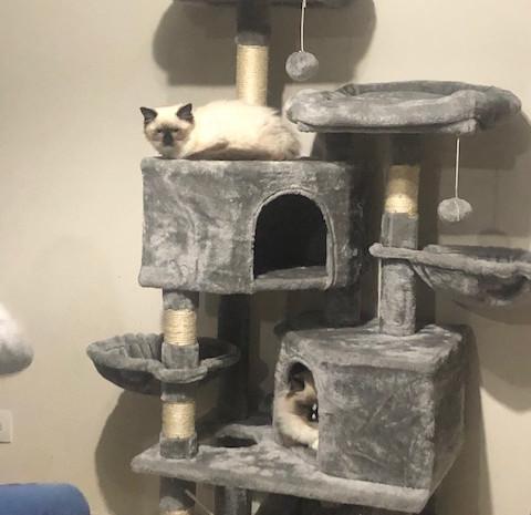 On valide le nouveau arbre à chat...