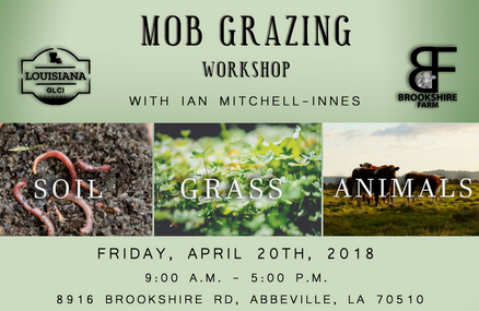 Mob Grazing Workshop with Ian Mitchell-Innes