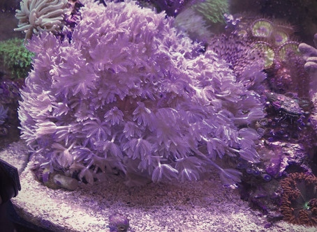 The Pico Reef:  A Journey Through a 2 Gallon Reef