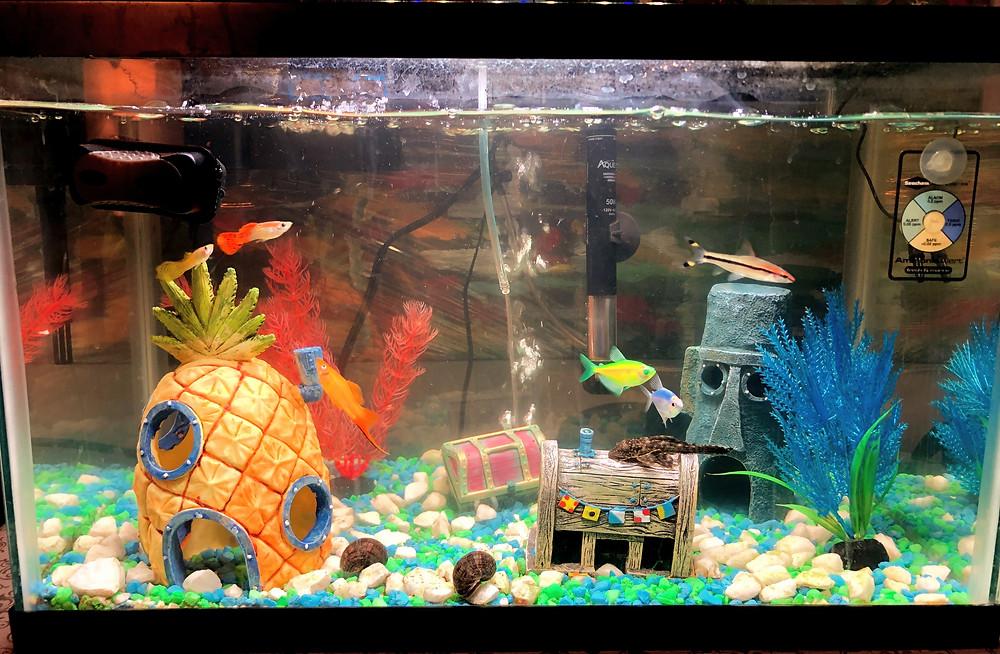 Picture of freshwater aquarium with SpongeBob decorations