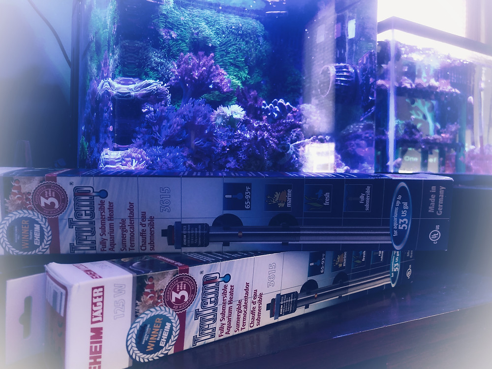 Eheim Jager Aquarium Hearer in front of BioCube 14 Reef Tank