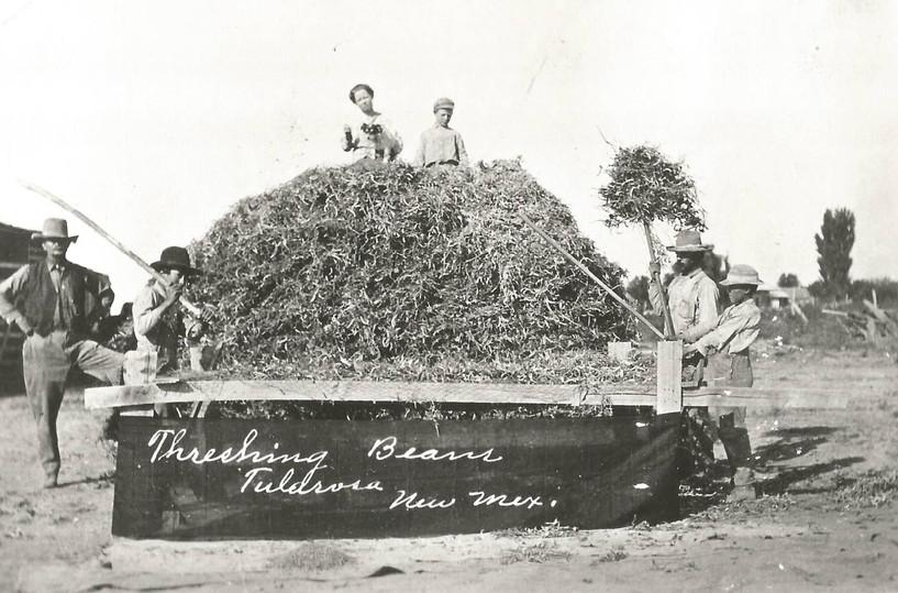 1904 Harvest