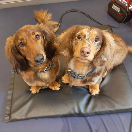 Mar 2021 Dogs of the Month: BRIAN & FRANK