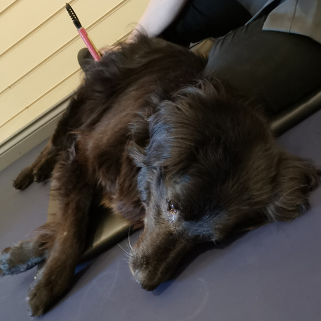 Aug 2020 Dog of the Month: ZACK