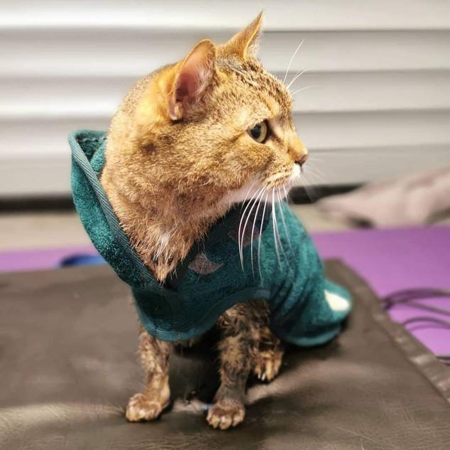 Albus wearing minature dachshund size coat