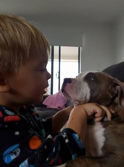 bullyindustriesfamilydogkids