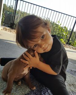 bully industries apbt puppy hugging