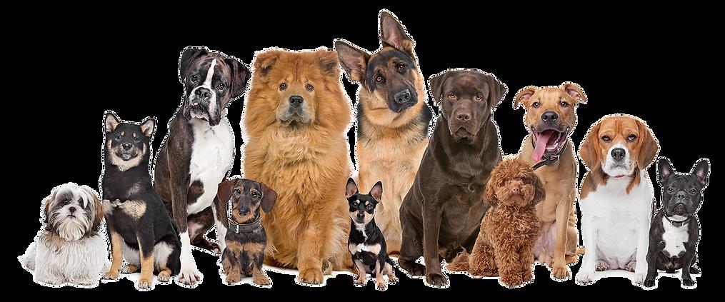 bully industries dogs german shepard pitbll smileing