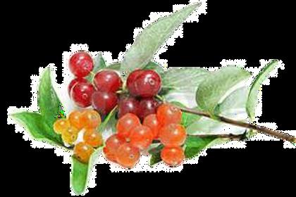 Berry Lip Balm