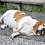 Thumbnail: Arthritis (Dogs)