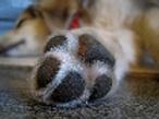 Paw wax (Dogs)