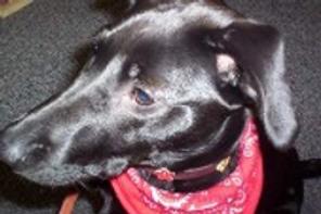 Ear Wash (Dogs)