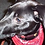 Thumbnail: Ear Wash (Dogs)