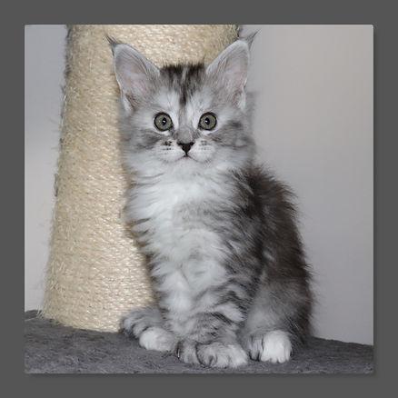 Marceline7.jpg