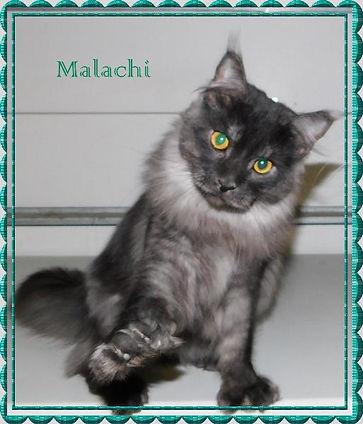 malachiframe5-513x600.jpg
