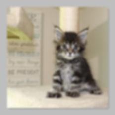 7 weeks Jasmine.jpg
