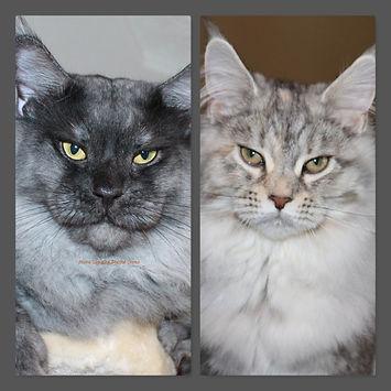 Prosper Daphne kittens.jpg