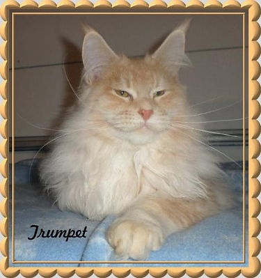 """Maui's Sire: Milacoon Behold The Trumpet Call, """"Trumpet"""""""