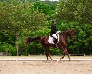 Cathy Seaver Website Equestrian 3.jpg
