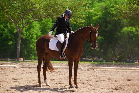Cathy Seaver Website Equestrian 1.jpg