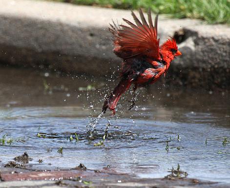 Clean Cardinal