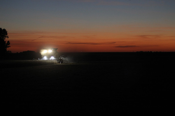 Harvest at dusk