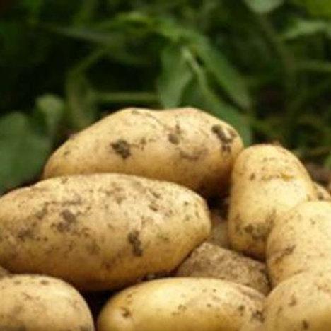 Pommes de terre nouvelles bio (le kg)