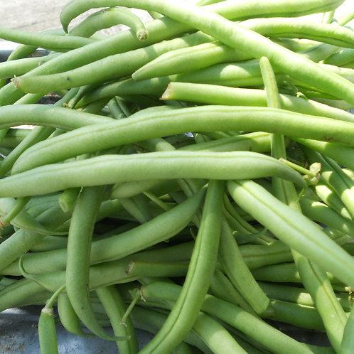 Haricots verts bio ( les 500g)