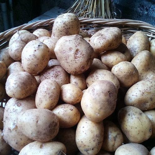 Pommes de terre  bio (le kg)