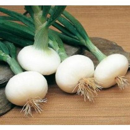 Oignons blancs bio (la botte)