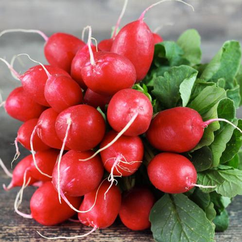 Radis rond rouge bio