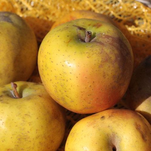Pommes Belchard bio (le kg)