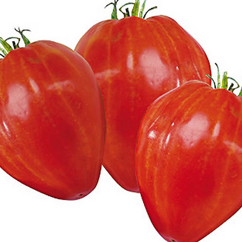 Tomates coeur de boeuf bio (les 500g)