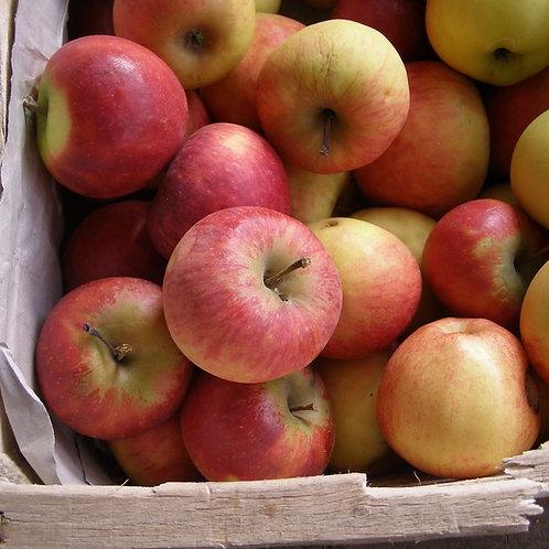 Pomme Elstar Bio (le kg)