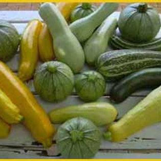 Courgettes mélange de variétés bio (le kg)
