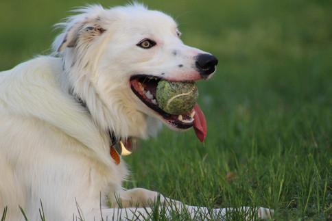 slobber ball