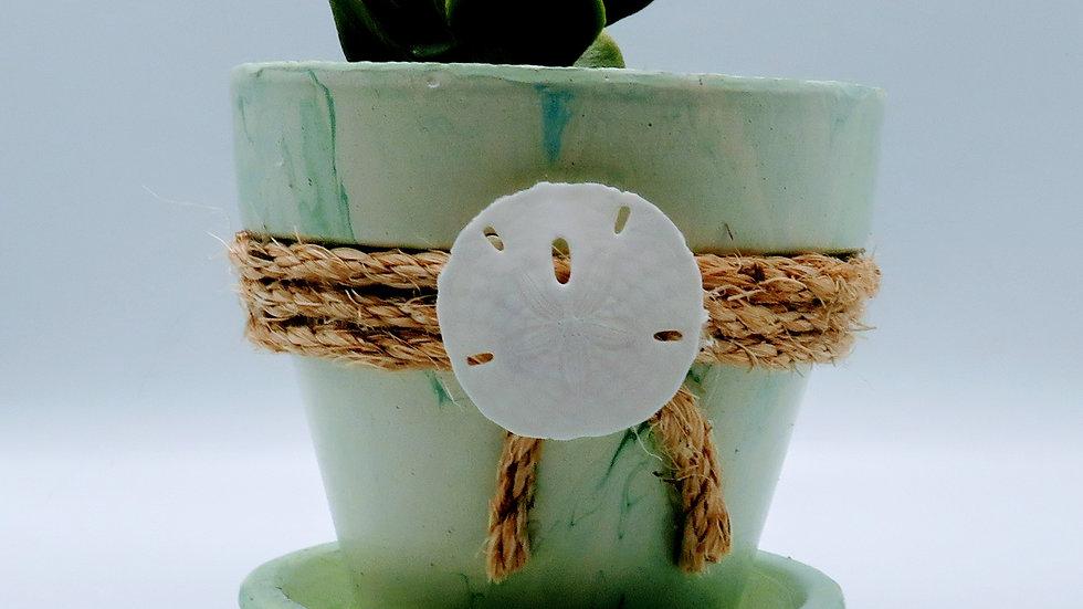 Tie Dyed planter pot w/succulent
